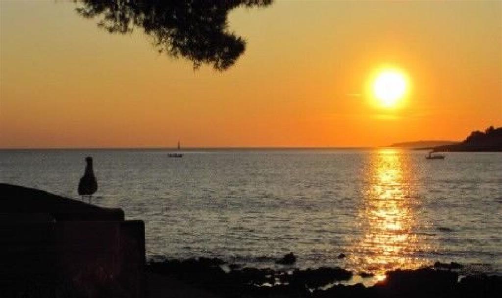 Appartement de vacances Ferienwohnungen Arsen 61991-A5 (2820195), Mali Lošinj, Île de Losinj, Kvarner, Croatie, image 27